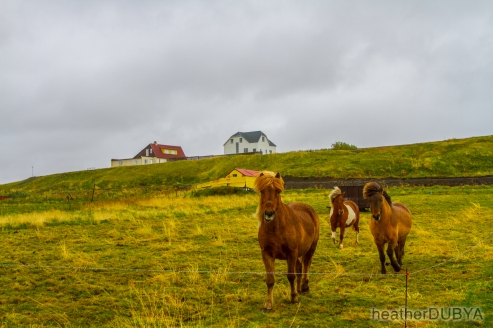 Iceland (40 of 40)